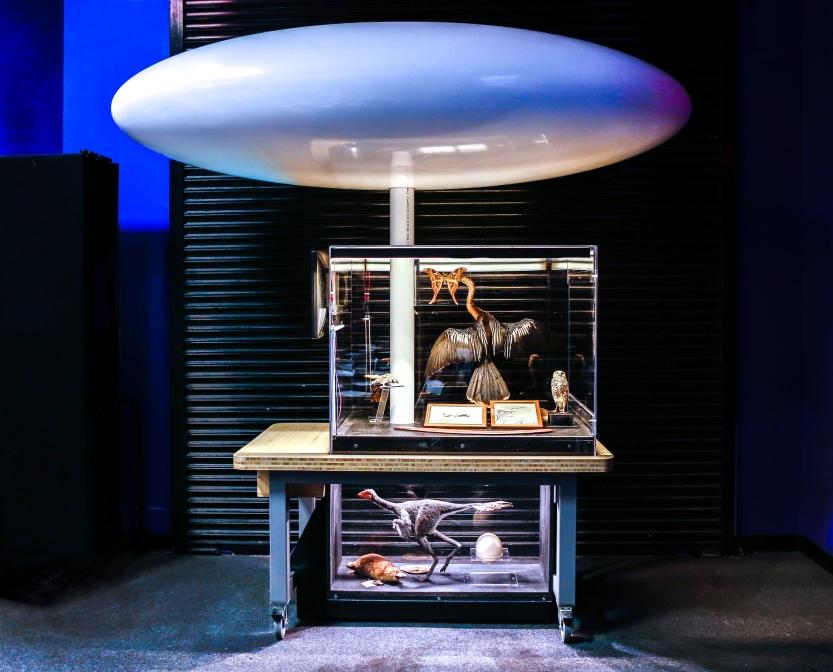 Curious Vault Collaborations #2: Flight