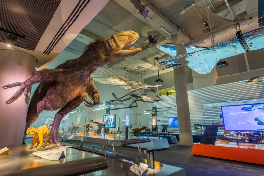 The Feathers to the Stars exhibition carries you through the amazing story of how ancient evolution gave birth to animal flight, how humans used imagination and engineering to get airborne and how outer space is the next frontier.